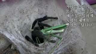 getlinkyoutube.com-헐 굶주린 타란튤라 먹이주다가 물림?ㄷㄷㄷㄷ이런