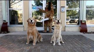 San Antonio - Humane Society