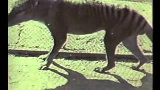 getlinkyoutube.com-The Tasmanian Tiger (1964)