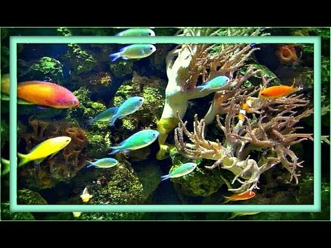 Aquarium Meditation - 1 Hour (with Music)