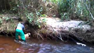 getlinkyoutube.com-perdemos a paca  no rio Poxim