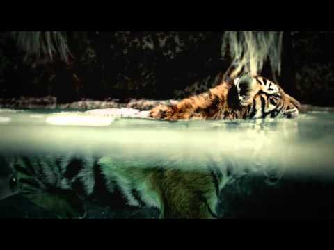 Nat Geo Wild 2010 Commercial HD