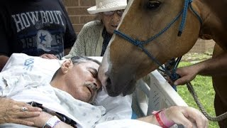 getlinkyoutube.com-Horse Visits Dying Vietnam Veteran Owner For Heartfelt Goodbye