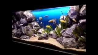 getlinkyoutube.com-Malawi aquarium 160x60x60 (african cichlid, lake malawi, Mbuna fishtank 500l) nice