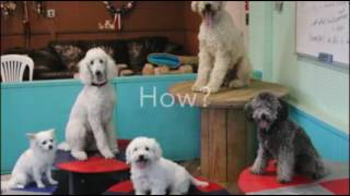 Overview of Puppy Work & Upbringing at HDBT