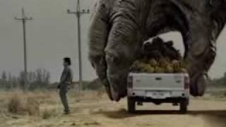 getlinkyoutube.com-Two Giant Gorilla plays the car