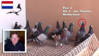 getlinkyoutube.com-10 Minutes with 12 Wonderful PIGEONS - Arona-TENERIFE 2010 Winners
