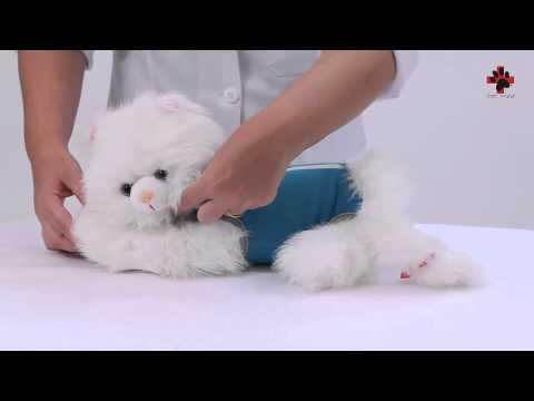 Farfalla Pet'S - Roupa Pós Cirúrgica Exclusiva para Gatos