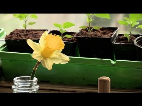 Self-Sufficient Urban Gardening with Alys Fowler