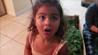 getlinkyoutube.com-Poniendo el Árbol de Navidad,llevandole comida a mi hijo y mucho mas