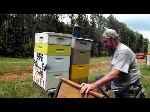 BEEPOLLEN TRAP BEEHIVE Basics Bee Pollen Trapping Honeybee Beekeeping Beekeeper John Pluta Video GA.