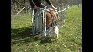 getlinkyoutube.com-WM Ironwork ewe turnover crate