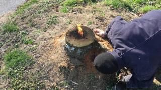 The most amazing way to remove a stump!! E16
