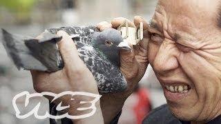 getlinkyoutube.com-China's Millionaire Pigeon Racers (Full Length)