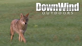 getlinkyoutube.com-Coyote Hunting: Coming in Hot (DownWind Outdoors)
