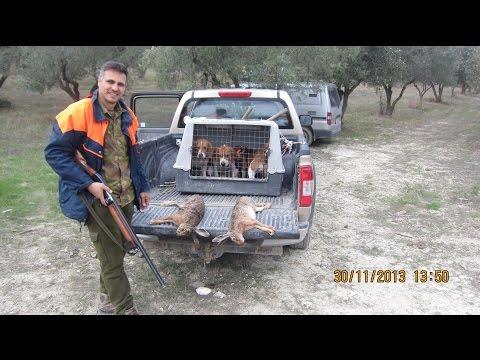 ΚΥΝΗΓΙ ΛΑΓΟΥ ΜΕ BEAGLE...Eπιλεκτηκη εκτροφη beagle tsirkoydis..N 3.   2013-2014