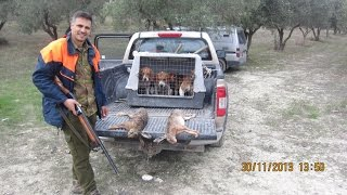 getlinkyoutube.com-ΚΥΝΗΓΙ ΛΑΓΟΥ ΜΕ BEAGLE...Eπιλεκτηκη εκτροφη beagle tsirkoydis..N 3.   2013-2014