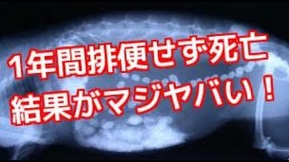 getlinkyoutube.com-【衝撃トピックス】便秘で1年間排便せず死亡した女性(21)を解剖した結果がヤバい!