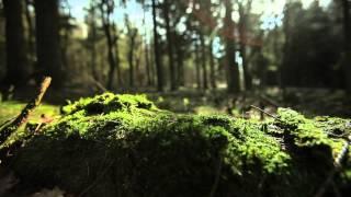 getlinkyoutube.com-Moss forest sun streaks FullHD