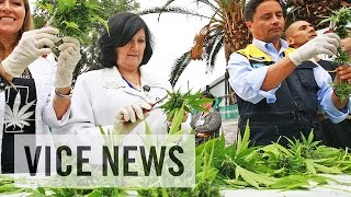 Vice News Daily: Chile\'s First Legal Crop of Medical Marijuana Harvested