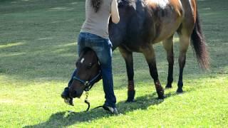 getlinkyoutube.com-Easy way to mount a Horse