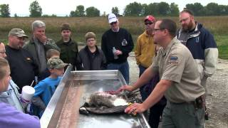 getlinkyoutube.com-Canada Goose Processing from Field to Table | Indiana DNR