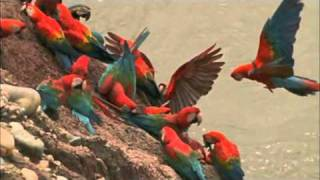 getlinkyoutube.com-Macaw Breeders Podcast #11
