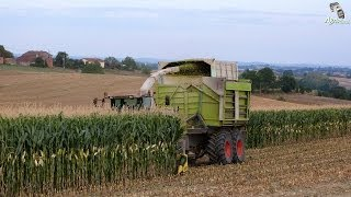 getlinkyoutube.com-Corn silage with Jaguar 900 field shuttle and John Deere