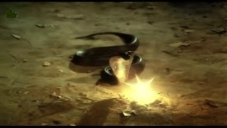 देखिये असली नागमणि की सच्चाई जानकर रह जायगे दंग !! | Nagmani Original Video Captured On Camera