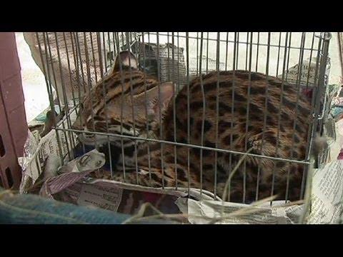La police thaïlandaise démantèle un trafic d'animaux sauvages