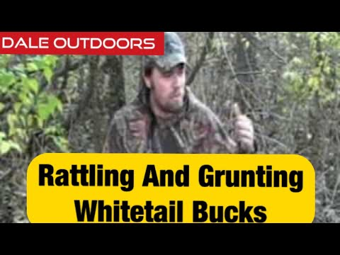 Rattling and Grunting Whitetail bucks