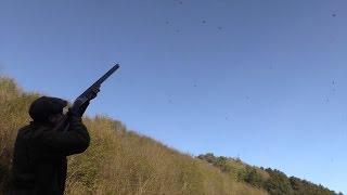getlinkyoutube.com-The Shooting Show - ultra high pheasant and partridge at the Rievaulx Estate
