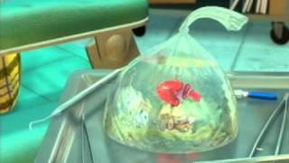 getlinkyoutube.com-Finding Nemo-Full Sound Replacement-Vinnie Resciniti and Angela Strignile
