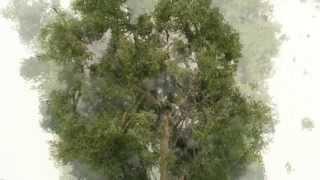 getlinkyoutube.com-how to make realistic model trees - bäume selber bauen