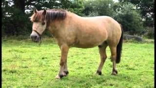 getlinkyoutube.com-petit poney officiel clip