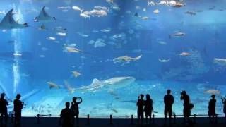 getlinkyoutube.com-Kuroshio Sea - 2nd largest aquarium tank in the world - (Please Don't Go by Barcelona)