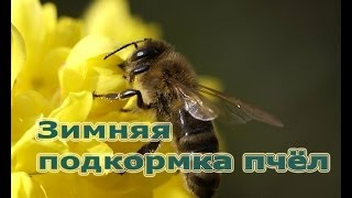 getlinkyoutube.com-Пчеловодство: зимняя подкормка пчёл мёдом)