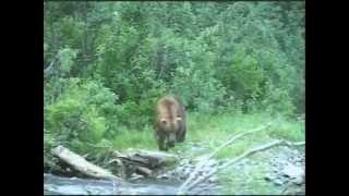 getlinkyoutube.com-Handgun Bear Hunt @ Stephan Lake Lodge