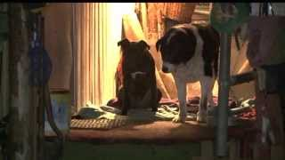 getlinkyoutube.com-Dog Brings Home Human Leg Bone