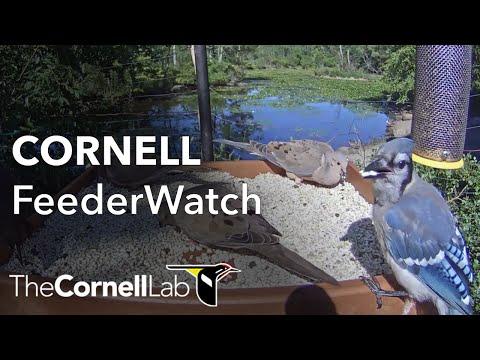 Cornell Feeders at Sapsucker Woods