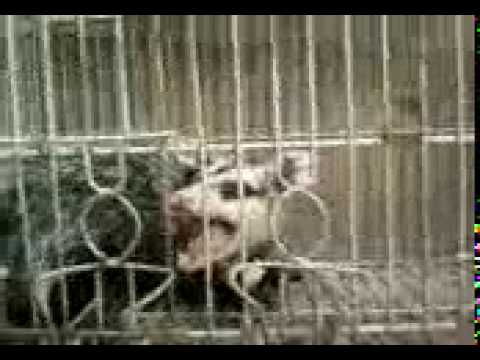 El animal más feroz - La reencarnacion de josé de ser