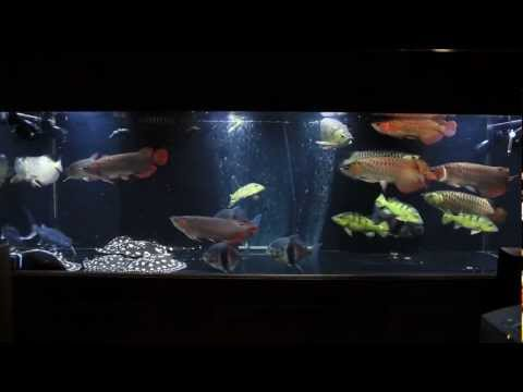 Monster 450 Tank December 2011 Update