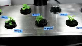 getlinkyoutube.com-Make Your Own Aerogarden Seed Pods - DIY Seed Pod Kits