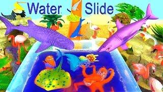getlinkyoutube.com-Learn Sea Animals Shark Names Wild Animals Zoo Toys Kids Childrens Video Fun