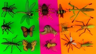 getlinkyoutube.com-INSECTS - Box 18 TOY COLLECTION Tarantula Scorpion Stag & Rhino Beetles Kids Toys SuperFunReviews