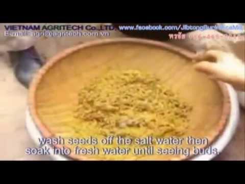 เครื่องหยอดแถวข้าวงอก (Rice Drum Seeder) Vietnam Direct Seeding / Paddy Row Seeder