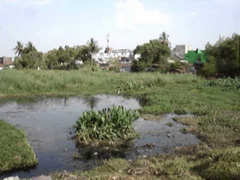 Management of Aquatic weeds in Dhobi Talab, Raipur