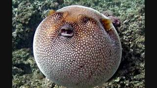 100 Most Weirdest and Rarest Animals in the World Real Pictures (Not Photoshopped)