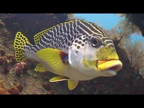 Diving in Bali (720p)