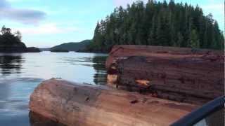 Spilled log bundles